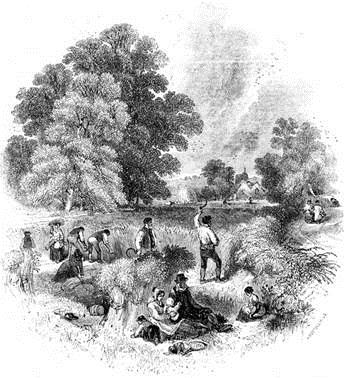 Harvesting with sickles depicted in a 19th-century print